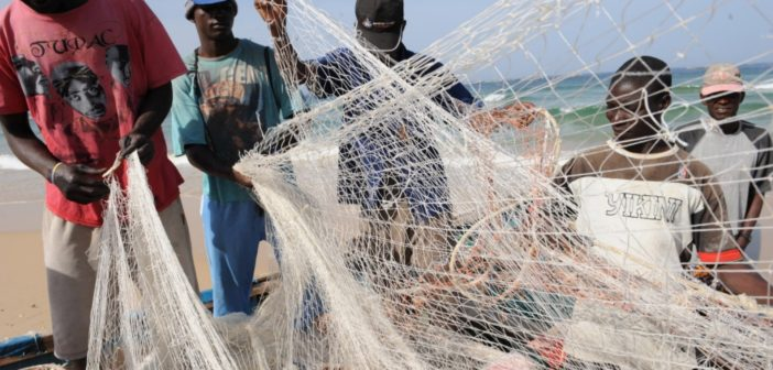 İnsan gıdası balıklar endüstriyel yem yapılıyor