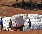 Pamuğu stoklayan tekstili engelliyor