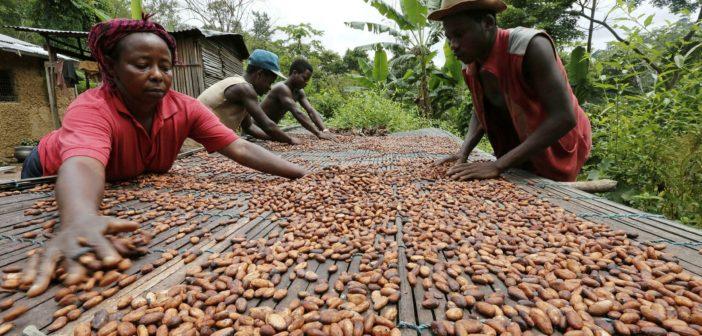 Afrikalı kakaodan 100 milyar dolar kazandırıyor, 2 milyar dolar kazanabiliyor