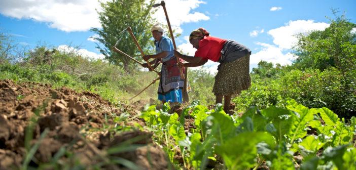 Dünyanın beslenebilmesi Afrika kıtasıyla mümkün